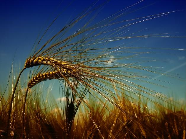 Protection des plantes en France : tripler la part de marché du biocontrôle d'ici 2025