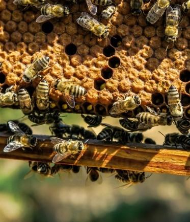 abeille entrant dans une ruche