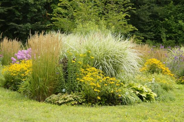 photo de plantes ornementale