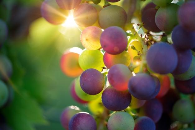 photo : grappe de vin