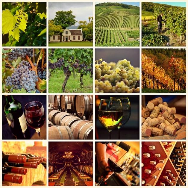 L'univers du vin