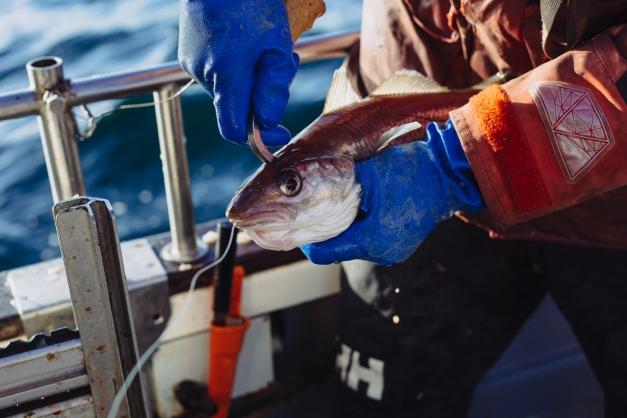 photo d'un pêcheur