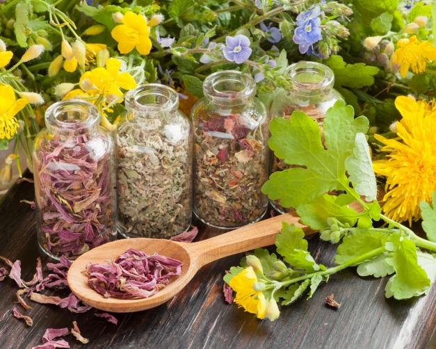 assortiment de plantes aromatique