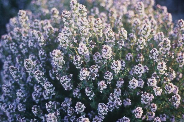 bouquet de thyn