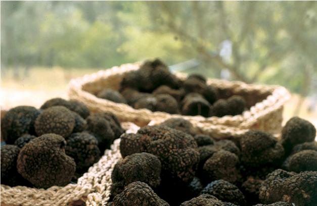 photo de truffes