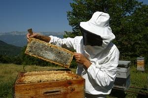 photo d'un apiculteur